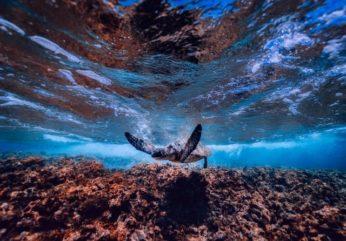 corail-grandebarriere640x446