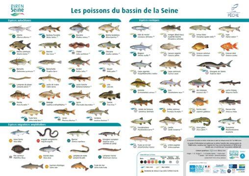 poster_poissons_seine_piren