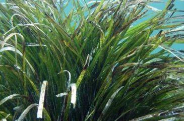 herbier-marins 2