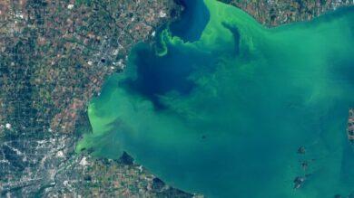 algues-LacErie