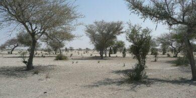 sahara-sahel-climat-secheresse