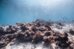 Coral Reefs Malaysia Photo by Logan Lambert on Unsplash