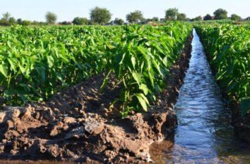Réutilisation des eaux usées pour l'irrigation
