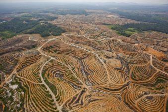 Illegal Lodging deforestation _ source Greenpeace