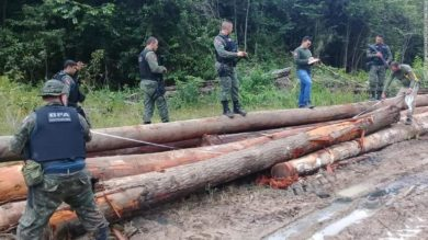 Wood illegaly removed from a reserve in Para, Brazil 2020 _ source CNN