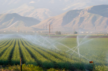Water, a precious commodity, irrigates a field in southern San Joaquin Valley.