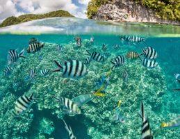 ecologie-preserver-biodiversite
