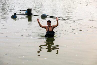 Chine, Province du Henan, Luoyang, pisciculture, carpes